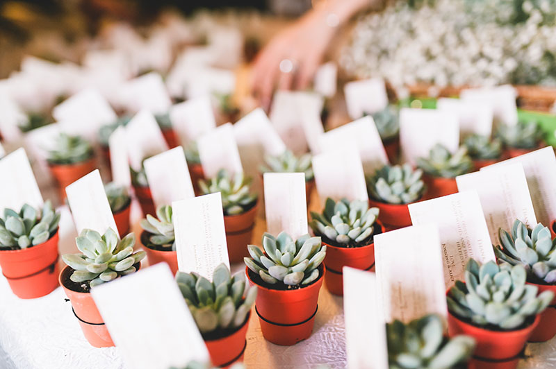 Succulent-wedding-favours